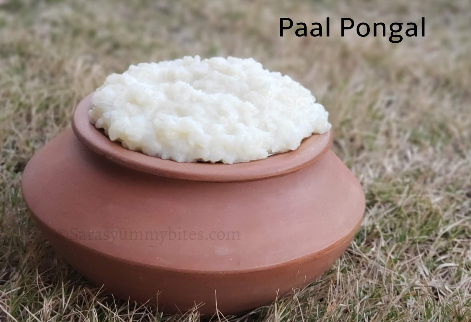 Paal Pongal